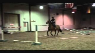 Horse jumping training gymnastics and improving bascule -  Calgary, Alberta