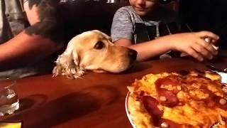 Наша собака водку не пьет