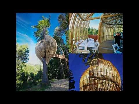 Yellow Treehouse Restaurant, New Zealand