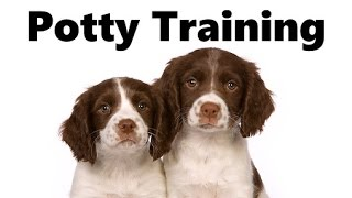 How To Potty Train A Springer Spaniel Puppy - House Training English Springer Spaniel Puppies