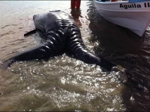 Scientists Reveal Identity Of Mysterious' Sea Monster'  Found On Mexican Beach