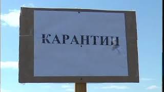 В с.Елецком Айыртауского района СКО пали порядка 500 кур