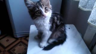 Проверяем, ЗНАЕТ ЛИ котёнок своё имя))