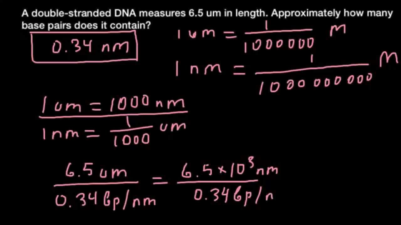 2b637b01c How to calculate number of base pairs in a DNA fragment - YouTube