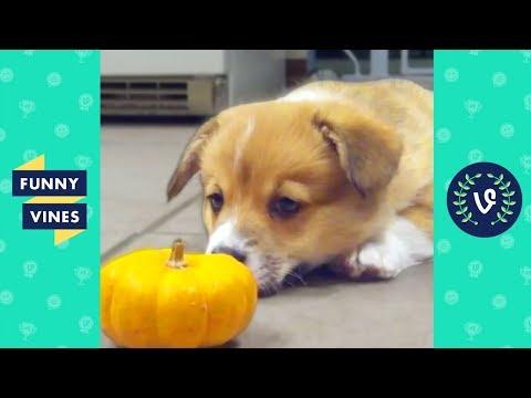 Viral Cute and Funny Animals Compilation 2017 | Funny Vines