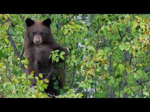 Nikon D850 Nikon 500mm F4 Grand Teton Moose, Bear Awesome Wildlife Photography Adventure
