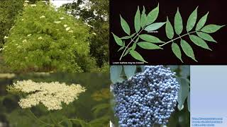 Conservation with Native Plants