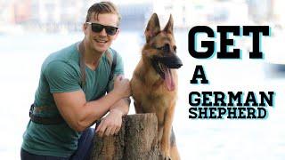 Reasons to get a German Shepherd
