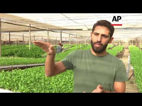 Hydroponic farm offers solution to water shortages