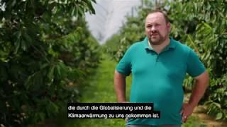 Thomas Lehner - Kirschessigfliege