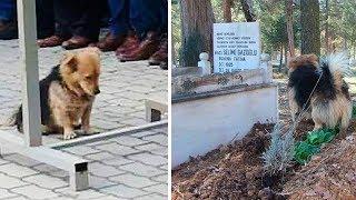 Преданный пёс каждый день приходит на могилу своего хозяина
