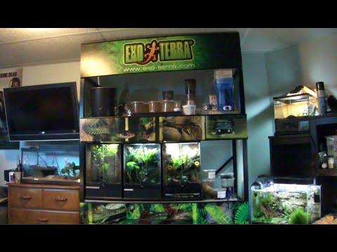 Sponsered By Exoterra Exo Terra Reptile Rack Update