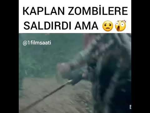 Kaplan zombilere saldirdi