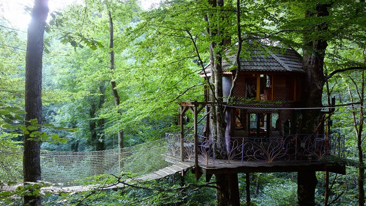 Building a tree house without hurting the tree natural - When building a house ...
