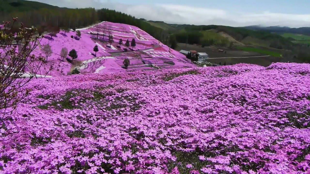 Hd ひがしもこと芝桜公園 Youtube