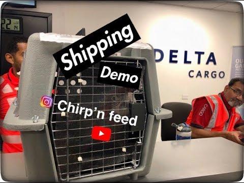 Delta Cargo Bird Shipping