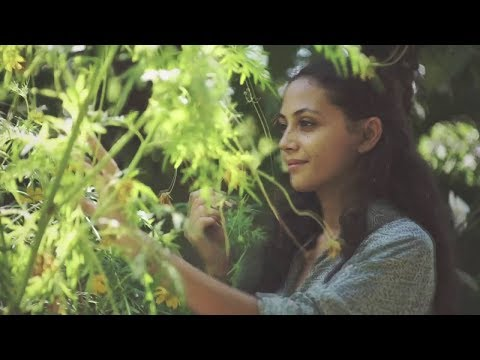 Dialog Dini Hari - Tentang Rumahku (Official Music Video)