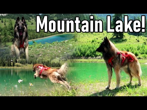 Belgian Shepherd Dog at a Beautiful Mountain Lake! + What Rancho eats at Camp!