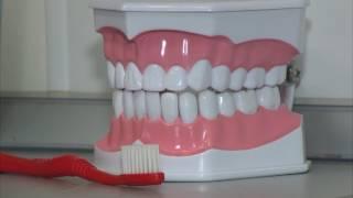 цена качества. Как выбрать зубную пасту