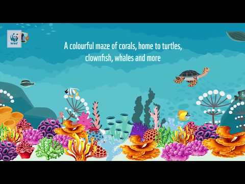 Crown Of Thorns Starfish And The Great Barrier Reef | WWF-Australia