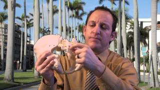 The Basics of Caudal Epidural Steroid Injections from Florida Pain Network