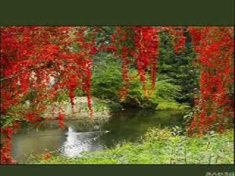 Видео: Биомузыка. Аура леса и воды.httprelax-photo.ru