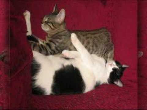 Cani e gatti i miei dolci animali youtube for Youtube cani e gatti