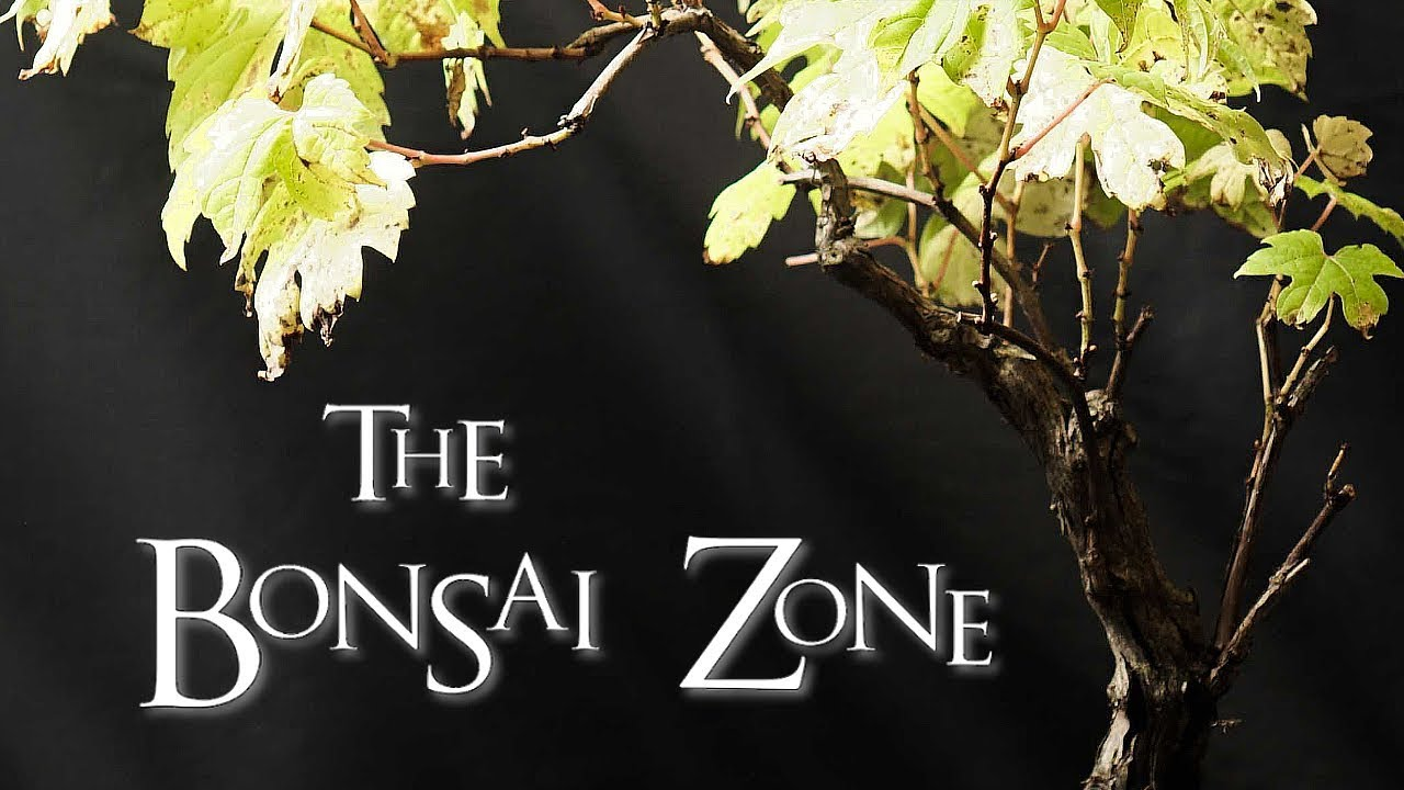 The Bonsai Zone The Kw Bonsai Club Show And Open House Sept 2017 Youtube
