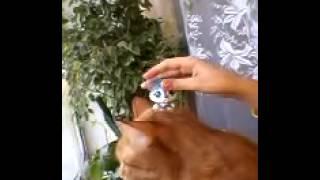 видео литл пет шоп кот