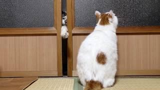 戸を開けてもらうしろ Cats Opening Door 2018#2