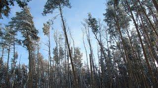 Природа, птицы, олени, лисы, сосновые леса, пейзажи
