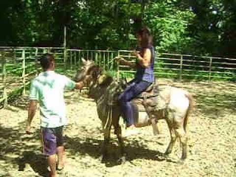 Ubay Stock Farm | Horseback Riding |OJT| NORSU MC II | Team Bohol
