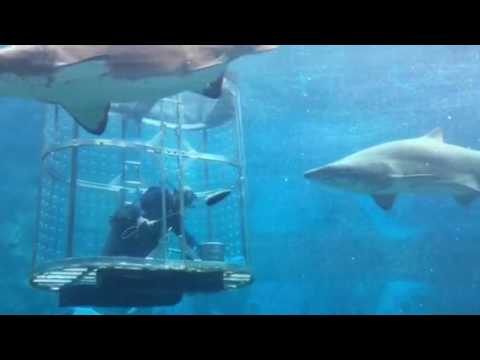 uShaka Marine World, Durban, South Africa - Shark Feeding