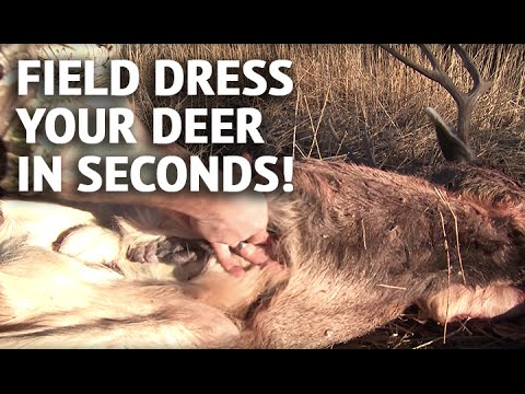 how to field dress a deer in seconds youtube