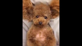 Funny dogs #20