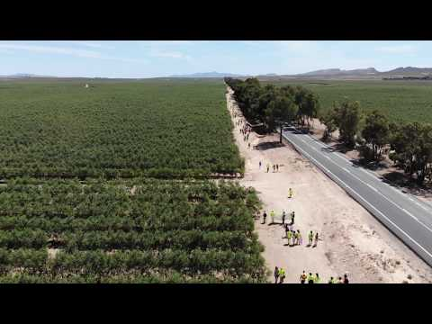 Millions of Super Intensive Olive Trees. Industrial Agriculture Almeria, Spain