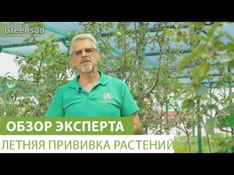 Размножение винограда черенками: схема, фото и видео
