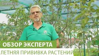 Летняя прививка растений(В этом видео наш эксперт расскажет Вам о летней прививке растений. Купить растения можно здесь http://www.greensad.ua/..., 2015-08-04T20:27:53.000Z)