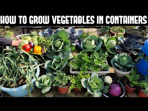 How To Grow Vegetables in Containers-FULL INFORMATION