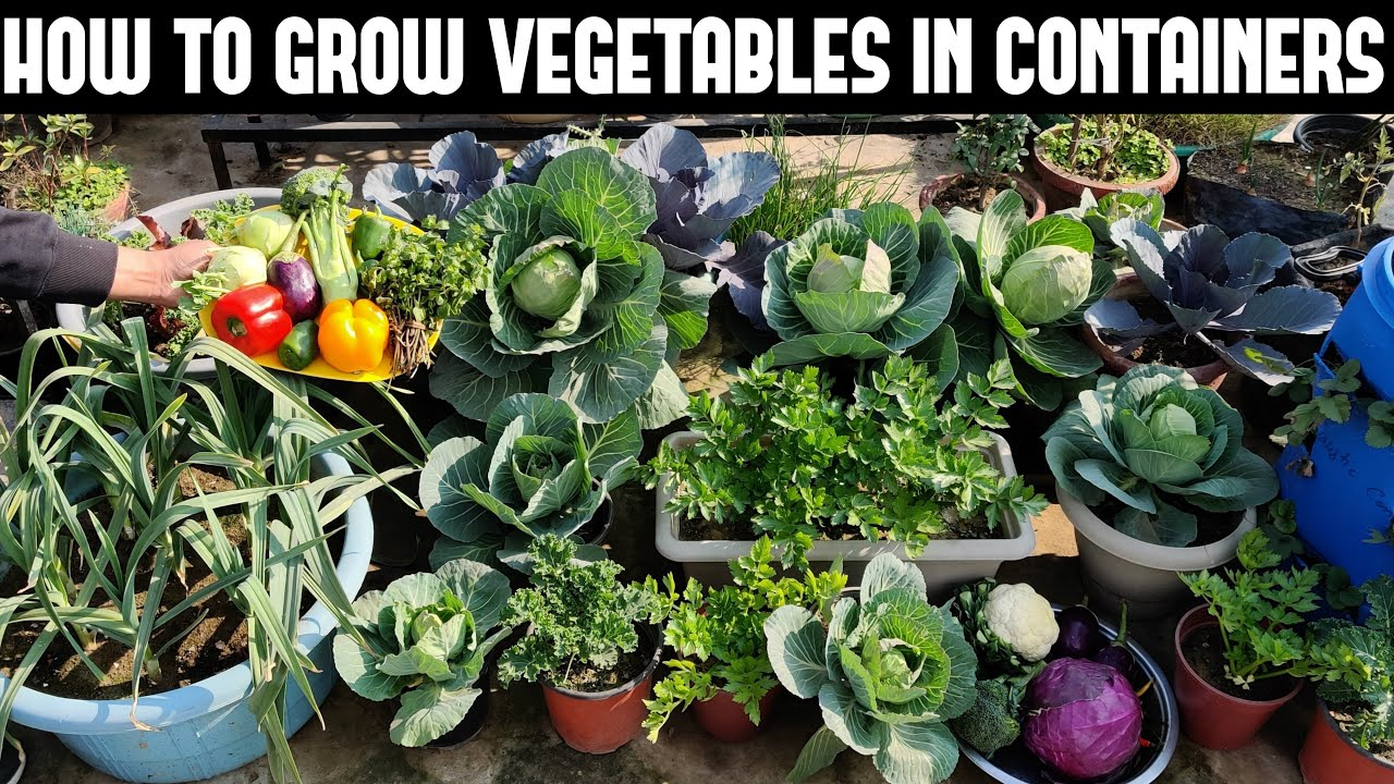How To Grow Vegetables In Containers Full Information