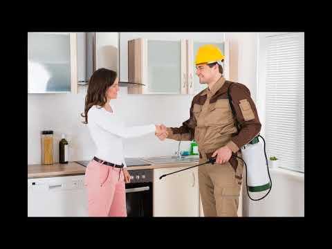 PCEO Pest Control Elgin 770-800-8335