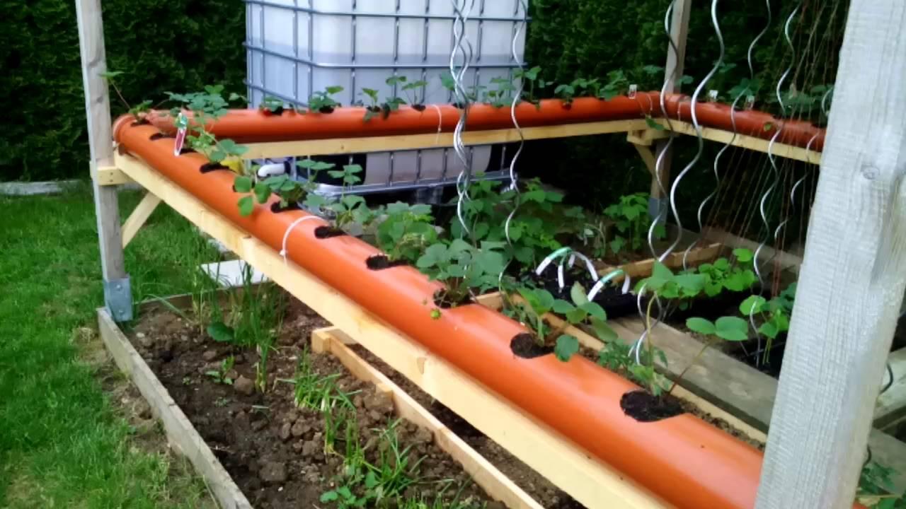Hochbeet Fur Erdbeeren Pflege Von Erdbeeren Von Der Pflanzung