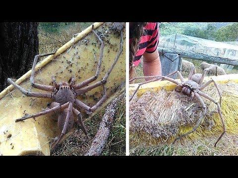 Frau rettet riesige Monster Spinne und setzt sie frei - Schaut, was passiert ist!