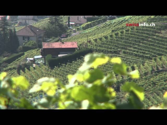 The Lavaux vineyards Travel Video