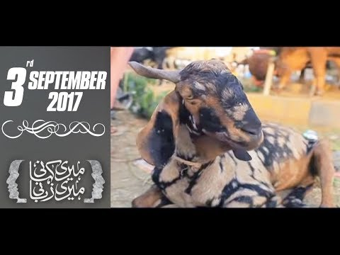Meri Kahani Meri Zabani - SAMAA TV - 03 Sep 2017