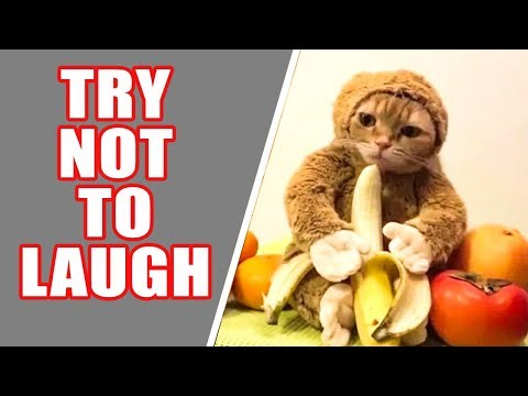FUNNY CATS - TRY NOT TO LAUGH 😂😂😂😂