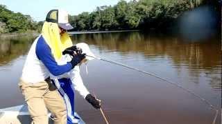 カズラの世界を釣る アマゾン・ネグロ川水系 淡水エイ