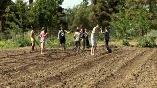 Veggielution: Community Farm