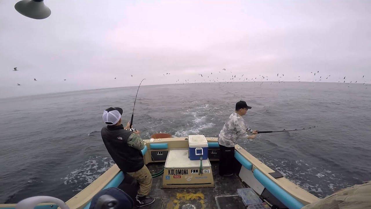 Rockfish, Lingcod & Yellowtail Santa Barbara Island March 20, 2016 ...