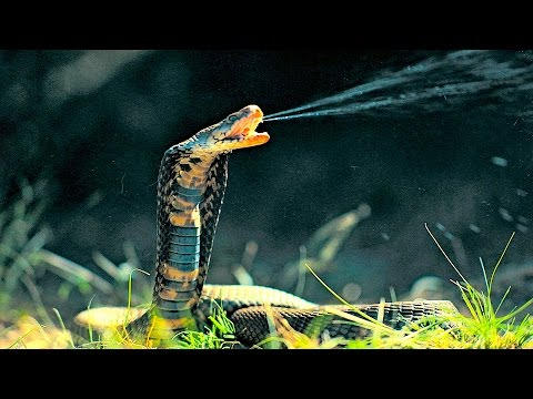 Thumbnail: Top 10 Most Venomous Snakes in the World